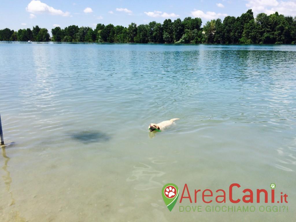 Dog Park Segrate - Idroscalo