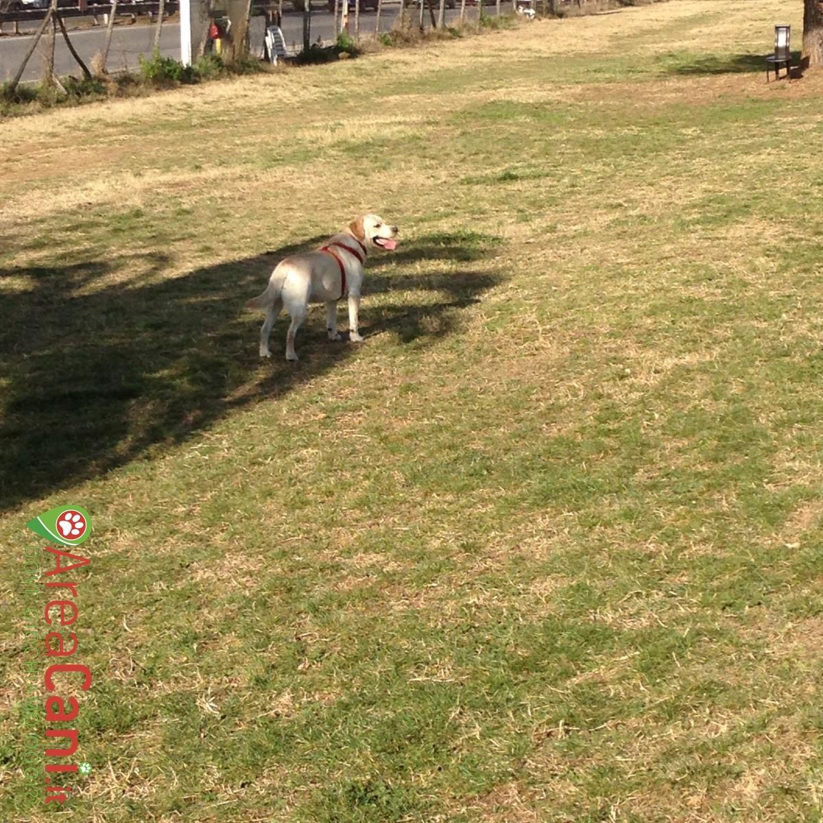 Dog Park Roma - Parco Petroselli
