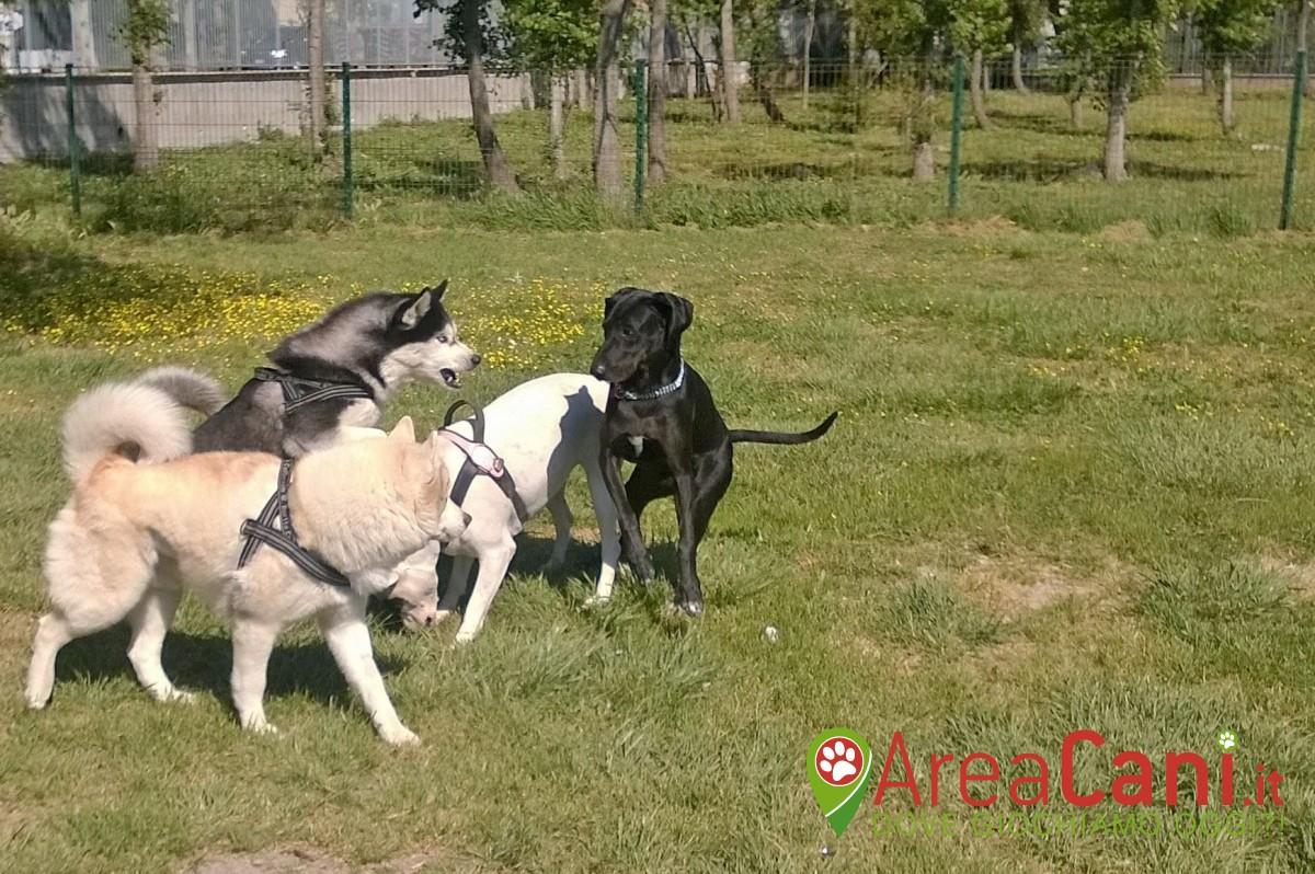 Dog Park Fiumicino - Villa Guglielmi