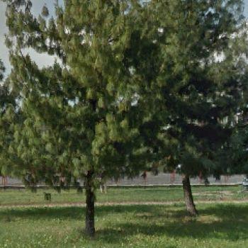 Dog Park Torino - via Olivero
