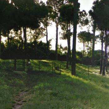 Dog Park Roma - Balduina (scuola Leopardi)