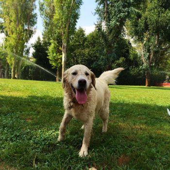 Dog Park Roma - Parco degli Eucalipti