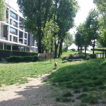 Dog Park Milano - piazza delle Milizie