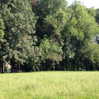 Dog Park Gallarate - via Covetta
