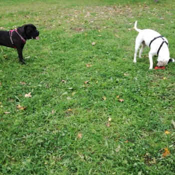 Dog Park Cerea - via Firenze
